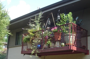 balcony container garden