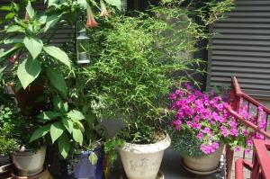 entryway container garden