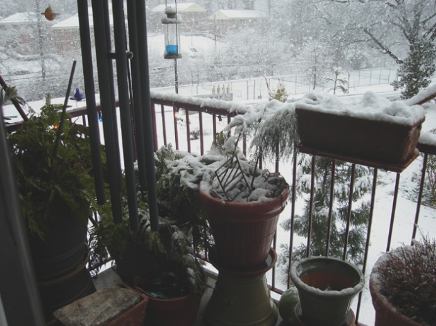 atlanta balcony; snow storm march 01, 2009